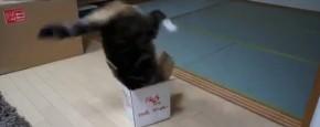 Schattig Momentje Van De Dag; dikke kat past niet in doos