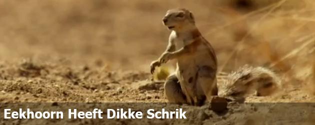 Eekhoorn Heeft Dikke Schrik
