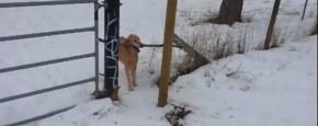 Hond Heeft Een Groot Dilemma