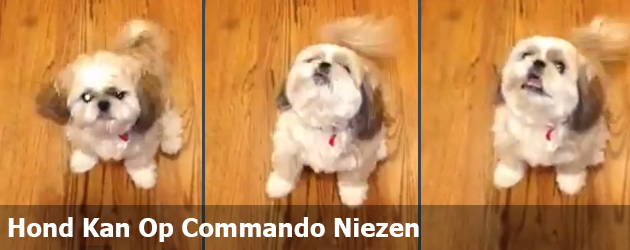 Hond Kan Op Commando Niezen
