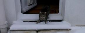 Schattig Momentje Van De Dag; kat ziet voor het eerst sneeuw
