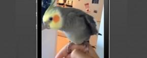 Vogel Kan Dubstep Zingen