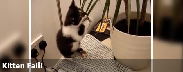 Kitten Fail!
