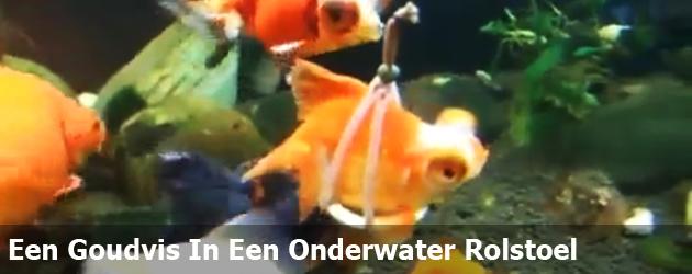 Een Goudvis In Een Onderwater Rolstoel