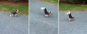 Hond Wil Geen Schoenen Dragen