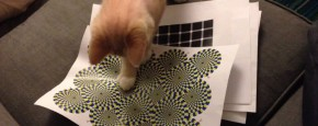 Kat Valt Optische Illusie Aan