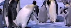 Schattig Momentje Van De Dag; pinguin fail compilatie