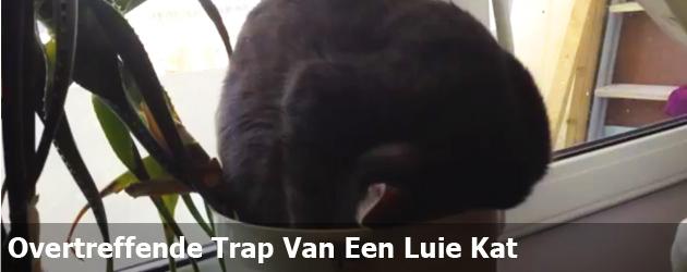 Overtreffende Trap Van Een Luie Kat