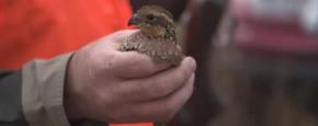 Beter Eén Vogel In De Hand