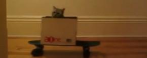 Cruising Cat