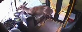 Go Home Deer...You're Drunk