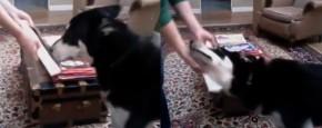 Hond Wordt Gek Van Parfum Proefmonster