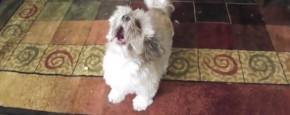 Maak Kennis Met Cody, De Schreeuw Hond