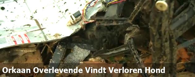 Orkaan Overlevende Vindt Verloren Hond Terug