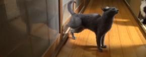 Kat Heeft Geen Kattenluikje Nodig
