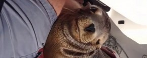 Baby Zeehond Geniet Er Eens Even Lekker Van