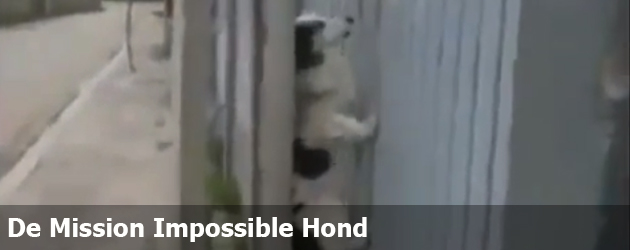 De Mission Impossible Hond