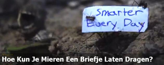 Hoe Kun Je Mieren Een Briefje Laten Dragen?