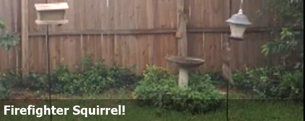Firefighter Squirrel!