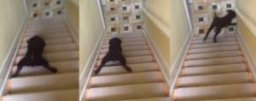 Puppy Gaat Plat Op De Buik De Trap Af