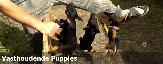 Vasthoudende Puppies