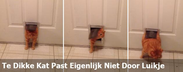 Te Dikke Kat Past Eigenlijk Niet Door Luikje