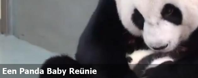Een Panda Baby Reünie