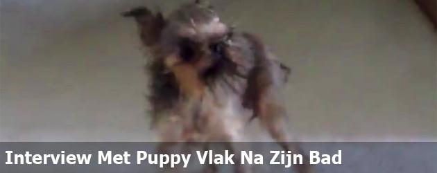 Interview Met Puppy Vlak Na Zijn Bad