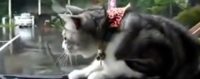 Kat Versus Ruitenwisser