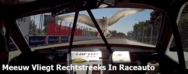 Meeuw Vliegt Rechtstreeks In Raceauto