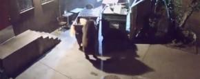 Yogi Bear Bestaat!