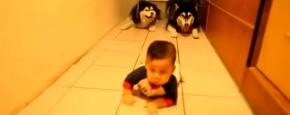 Honden Doen Kruipende Baby Na