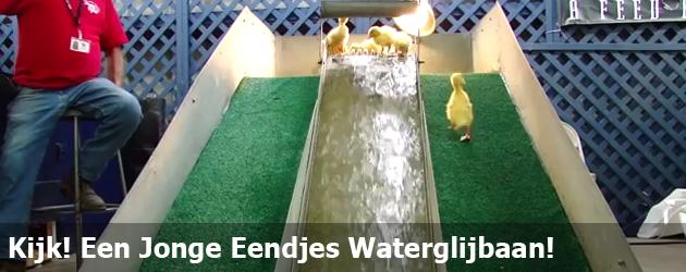 Kijk! Een Jonge Eendjes Waterglijbaan!