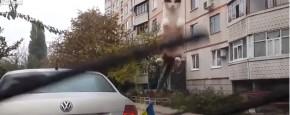 Kijk Nou Toch Eens! Een Vliegende Kat!