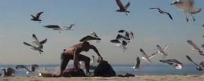 Verschrikkelijke Vogel Grap