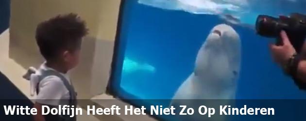 Witte Dolfijn Heeft Het Niet Zo Op Kinderen