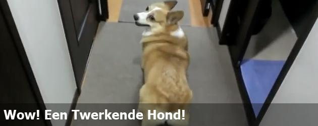 Wow! Een Twerkende Hond!