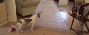 Hond Krijgt 210 Legen Flessen Als Kerstkado