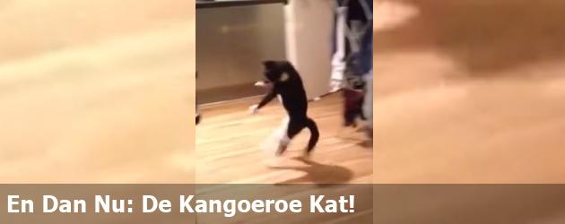 En Dan Nu: De Kangoeroe Kat!