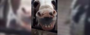 En Dan Nu: De Lachende Ezel!