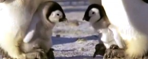 Penguins Doing Penguiny Things
