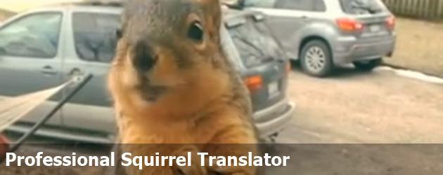 Professional Squirrel Translator