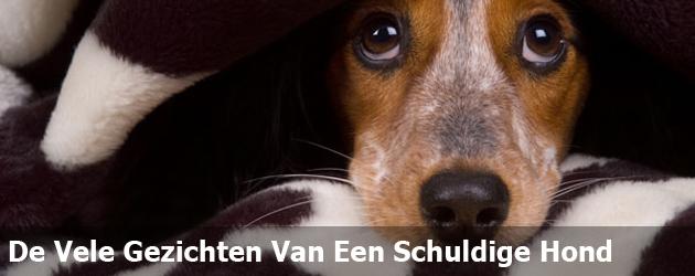 De Vele Gezichten Van Een Schuldige Hond