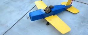 Eekhoorn Steelt Vliegtuig