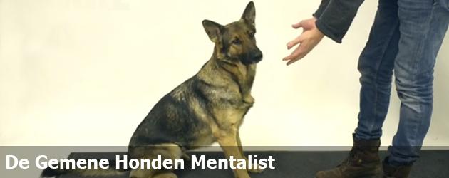 De Gemene Honden Mentalist