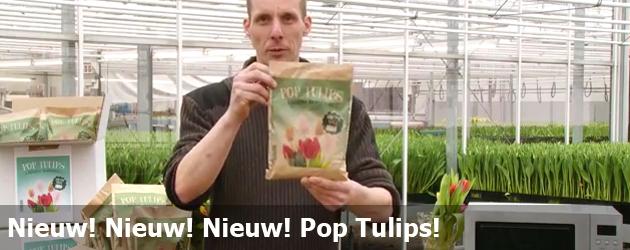 Nieuw! Nieuw! Nieuw! Pop Tulips!