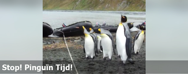Stop! Pinguïn Tijd!