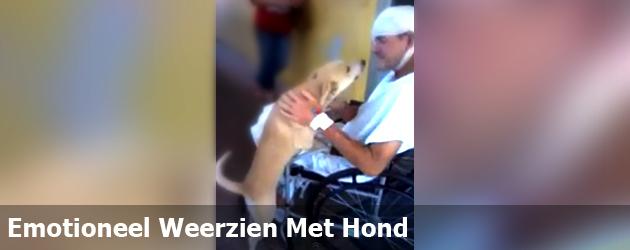 Emotioneel Weerzien Met Hond