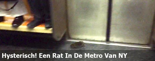 Hysterisch! Een Rat In De Metro Van NY