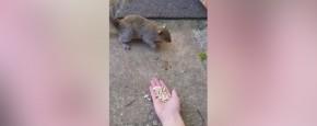 Mijn Eerste Keer Met Een Eekhoorn